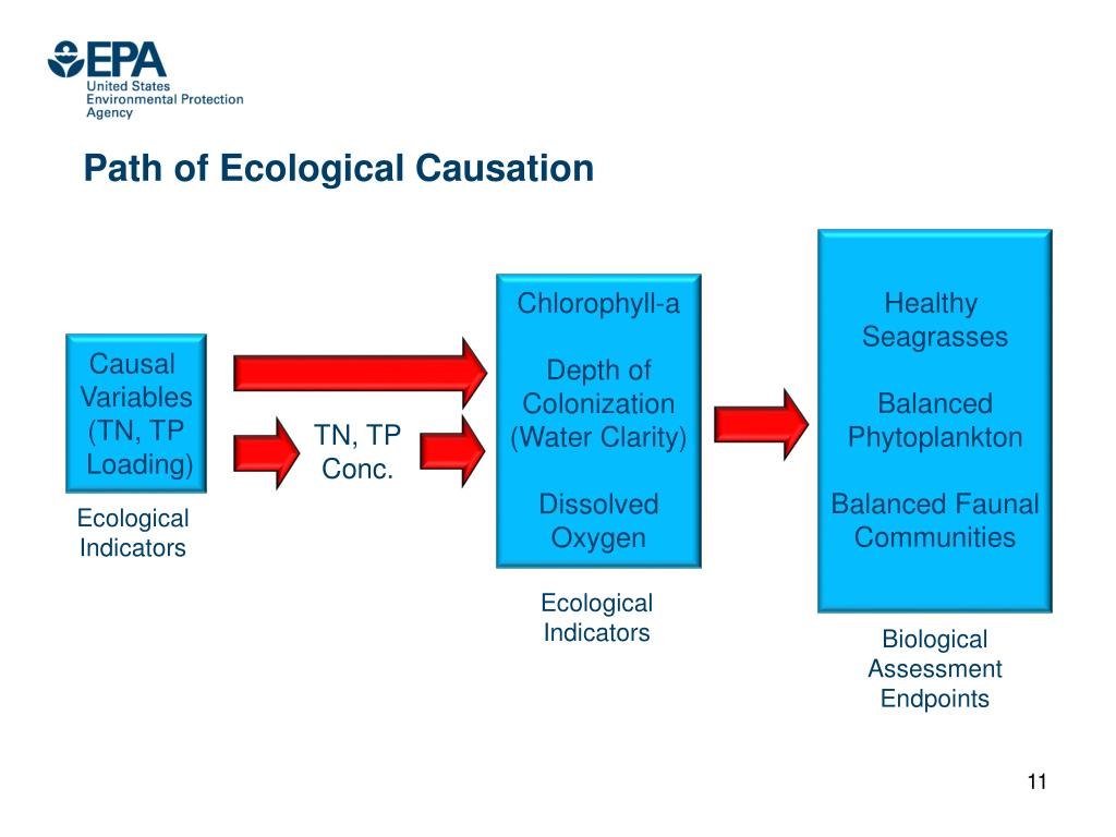 Path of Ecological Causation