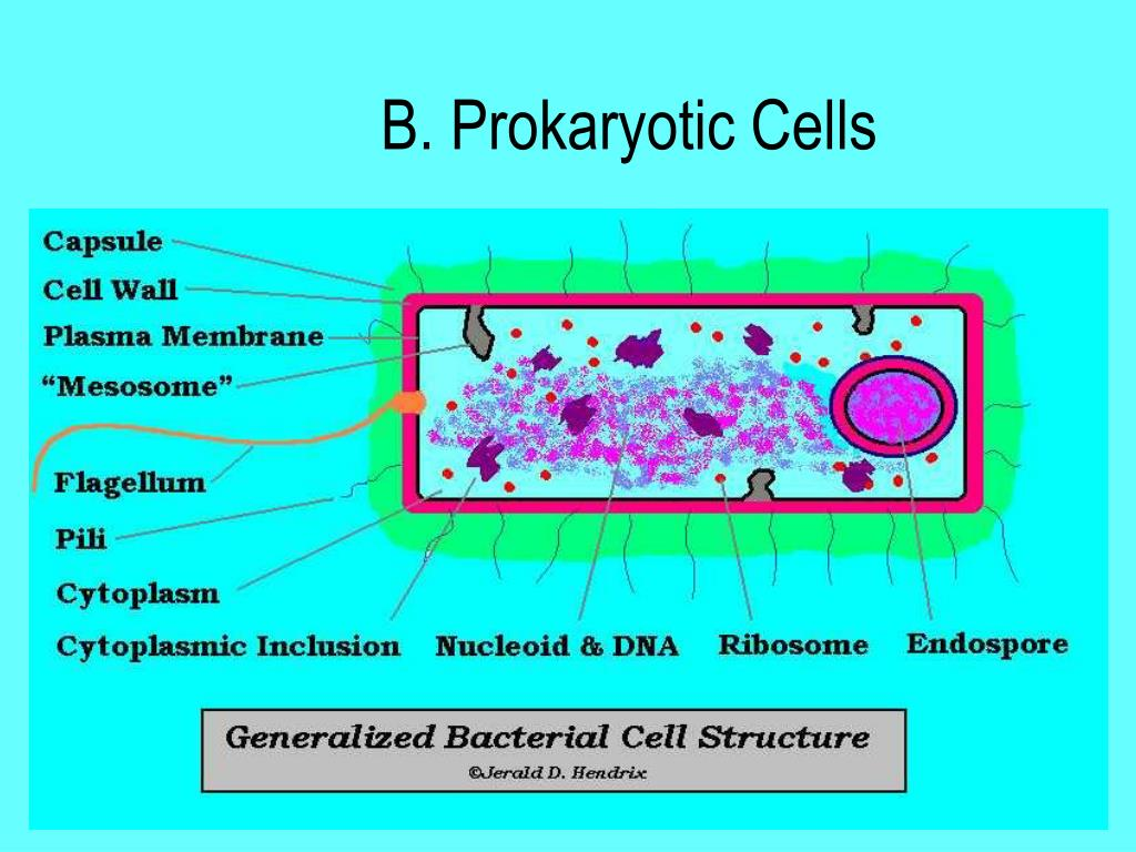 PPT - Microbial Cell Structure PowerPoint Presentation ...  PPT - Microbial...