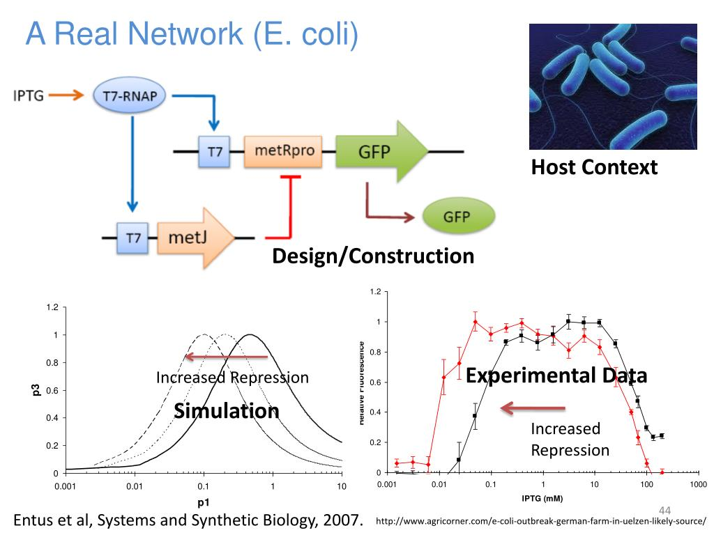A Real Network (E. coli)