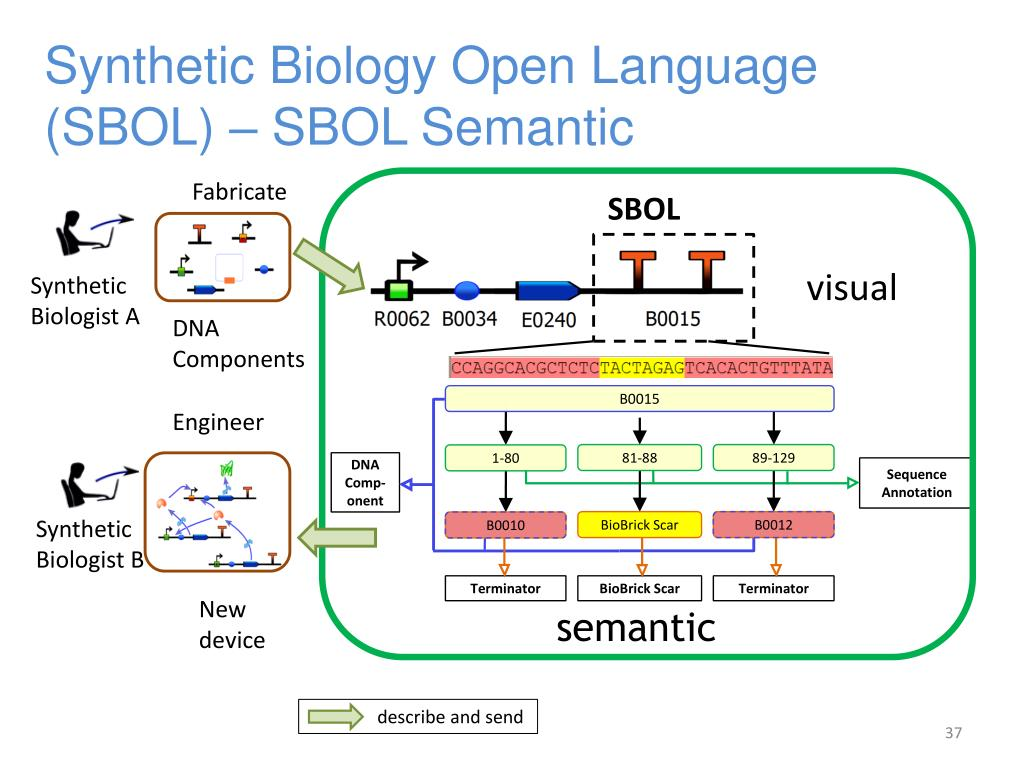 Synthetic Biology Open Language (SBOL) – SBOL Semantic