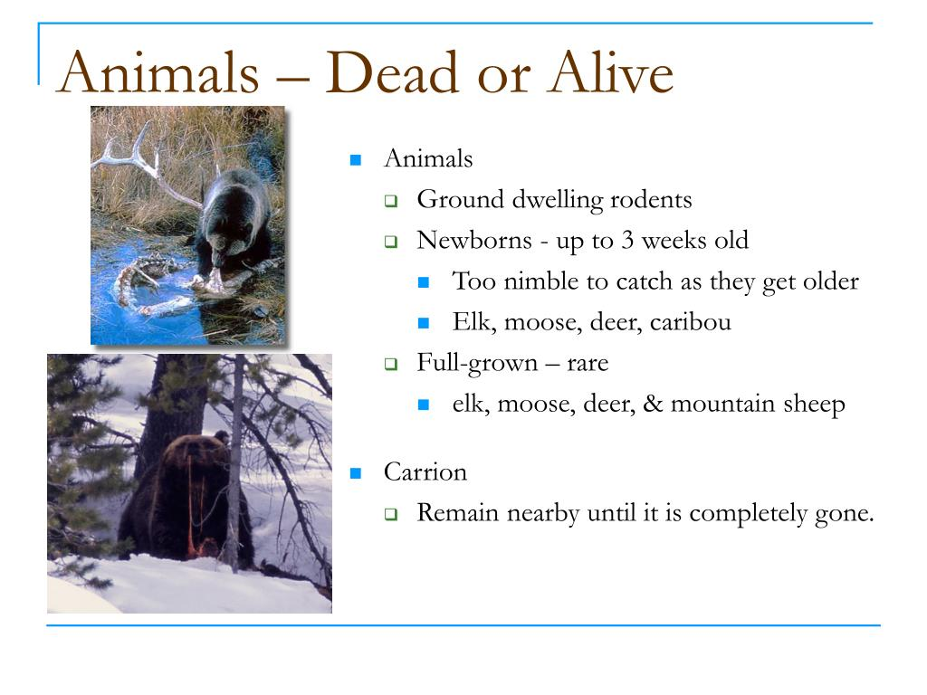 Animals – Dead or Alive