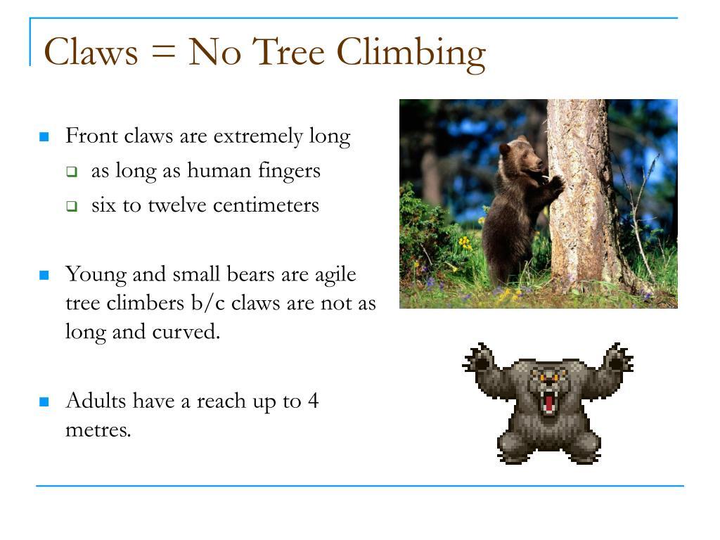 Claws = No Tree Climbing