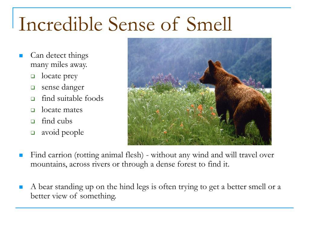 Incredible Sense of Smell