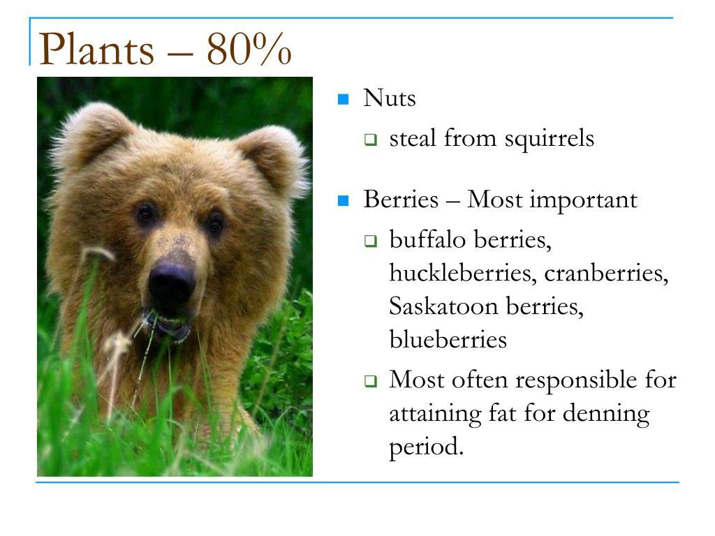 Plants – 80%