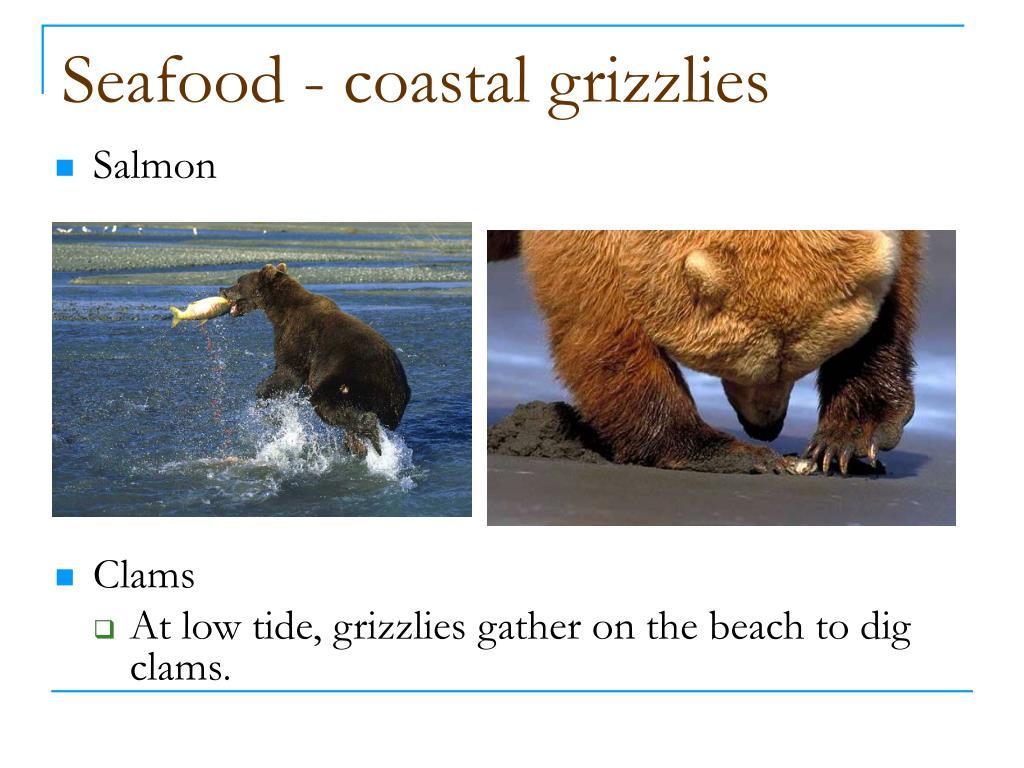 Seafood - coastal grizzlies