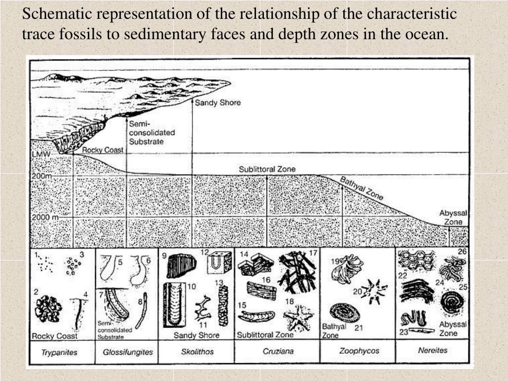 sedimentary rocks and fossils relationship counseling