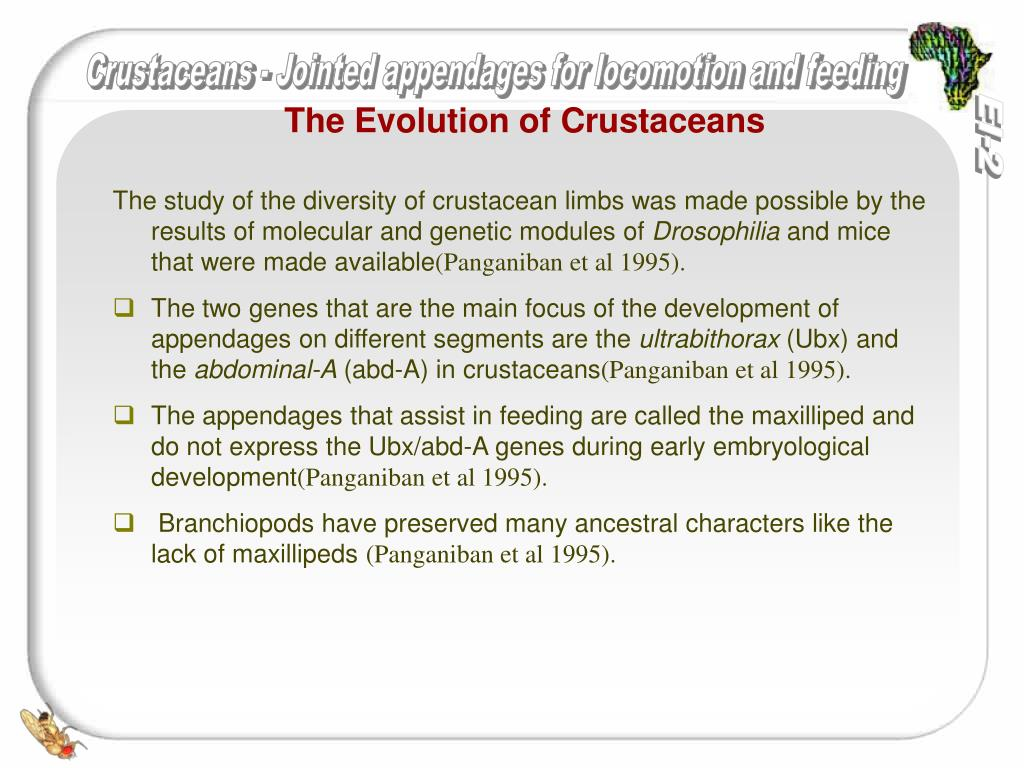 The Evolution of Crustaceans
