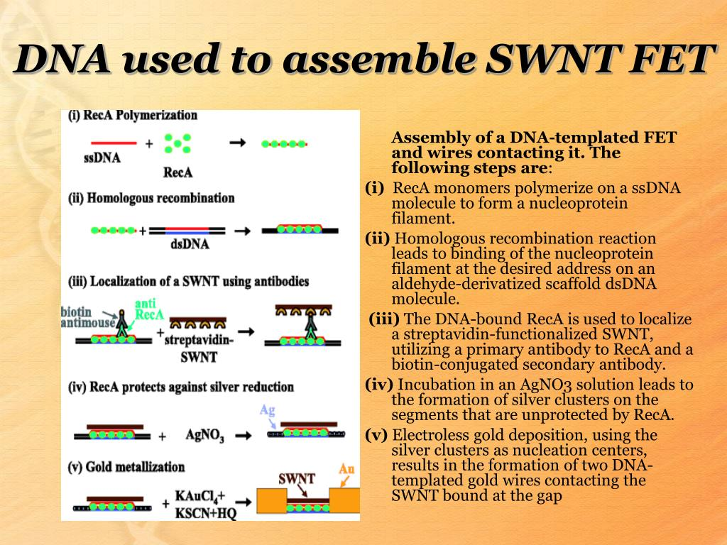 DNA used to assemble SWNT FET