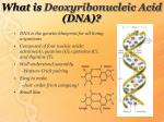 what is deoxyribonucleic acid dna