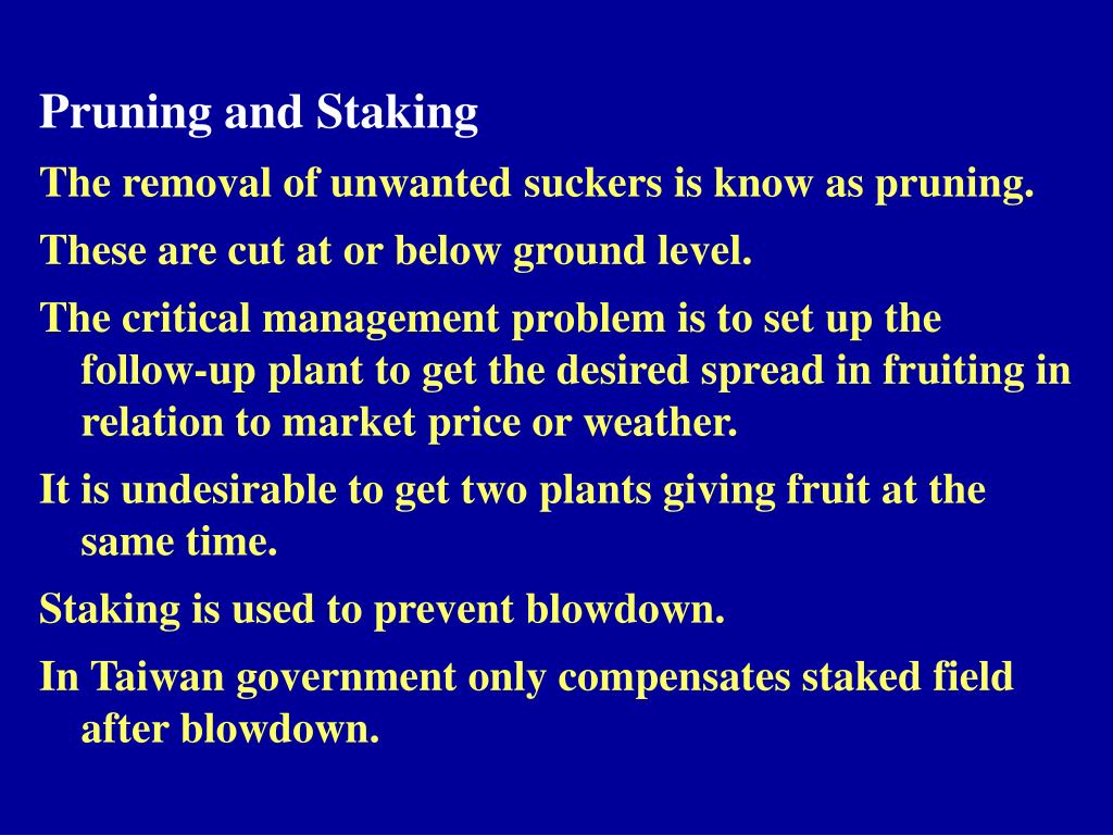 Pruning and Staking