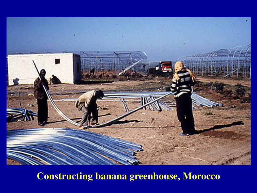 Constructing banana greenhouse, Morocco