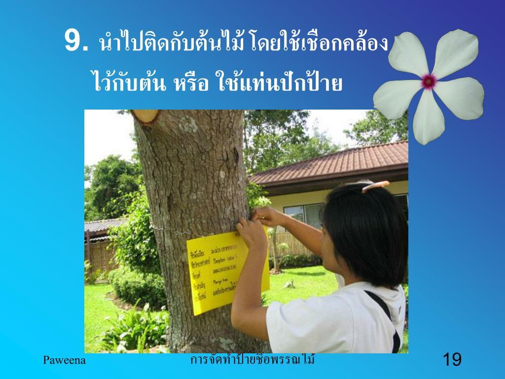 9. นำไปติดกับต้นไม้ โดยใช้เชือกคล้อง