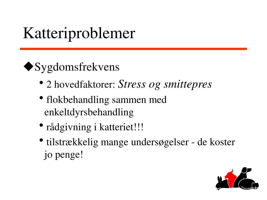 Katteriproblemer