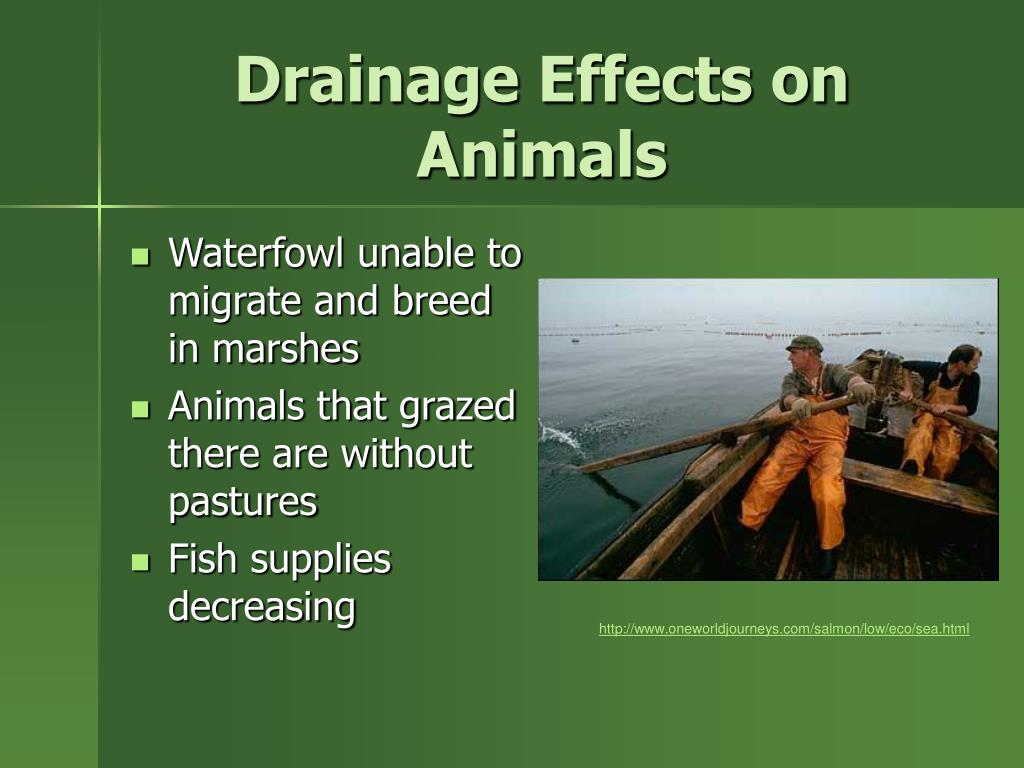 Drainage Effects on Animals
