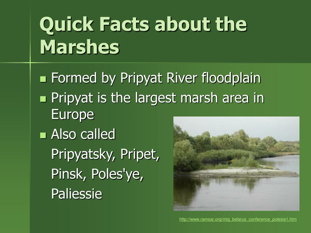 Quick Facts about the Marshes