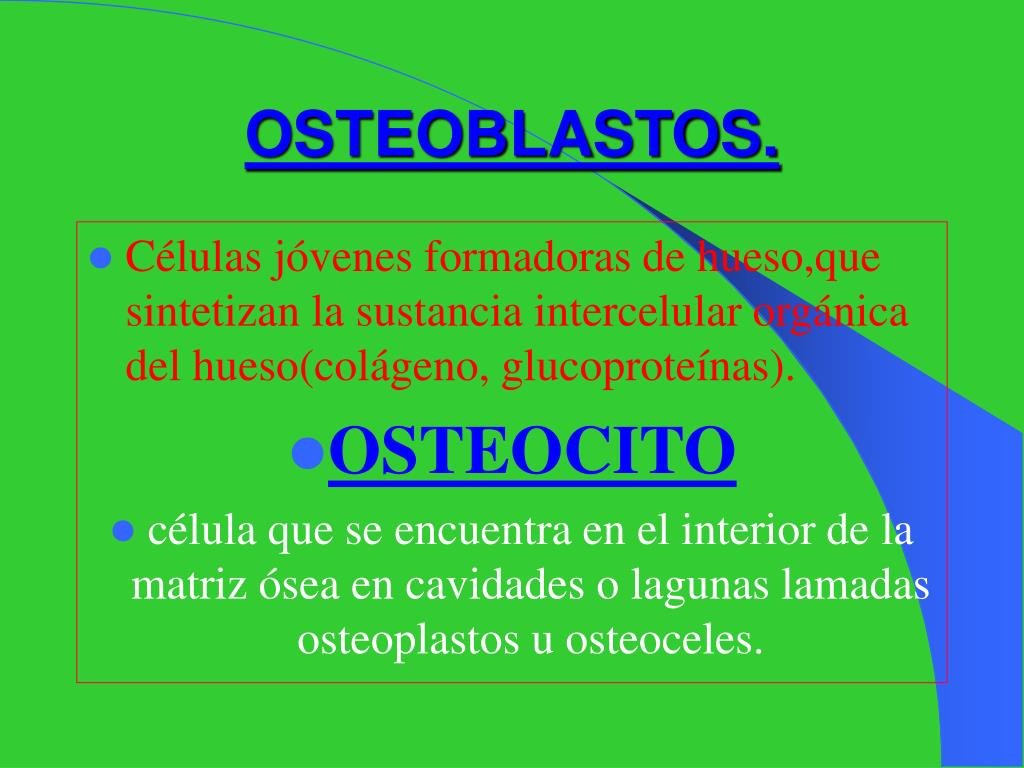 OSTEOBLASTOS.