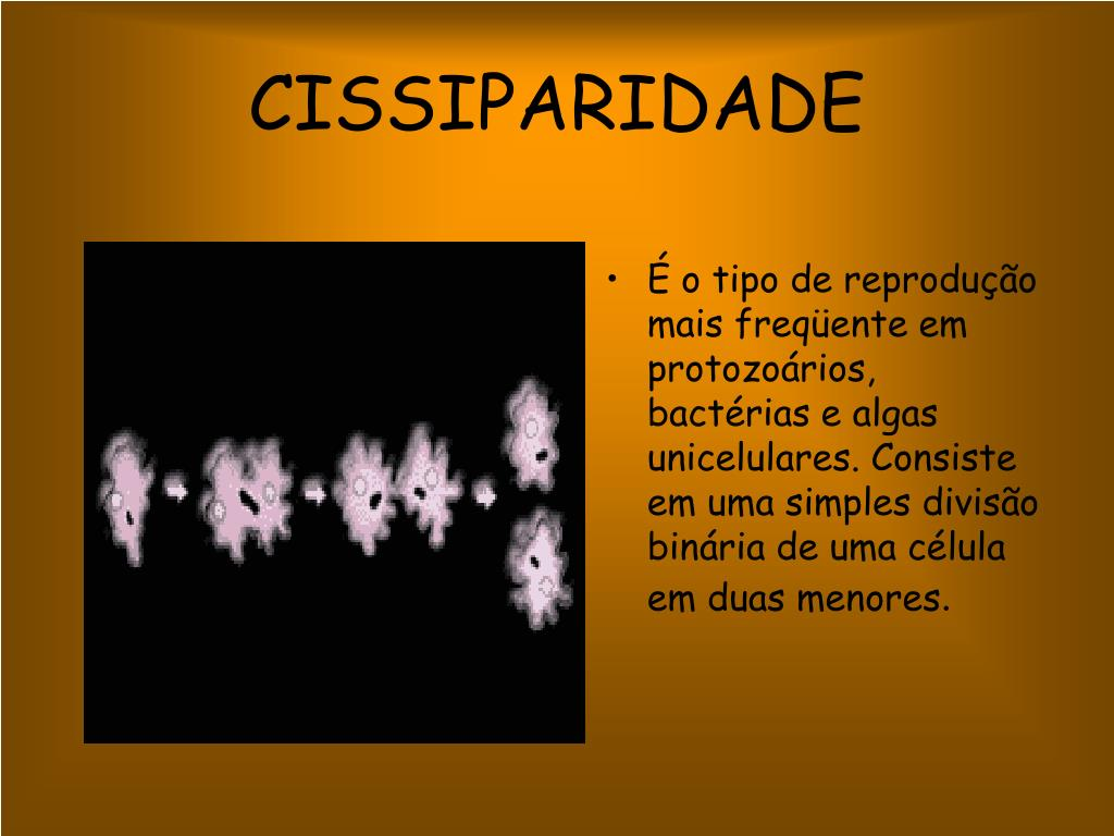 CISSIPARIDADE