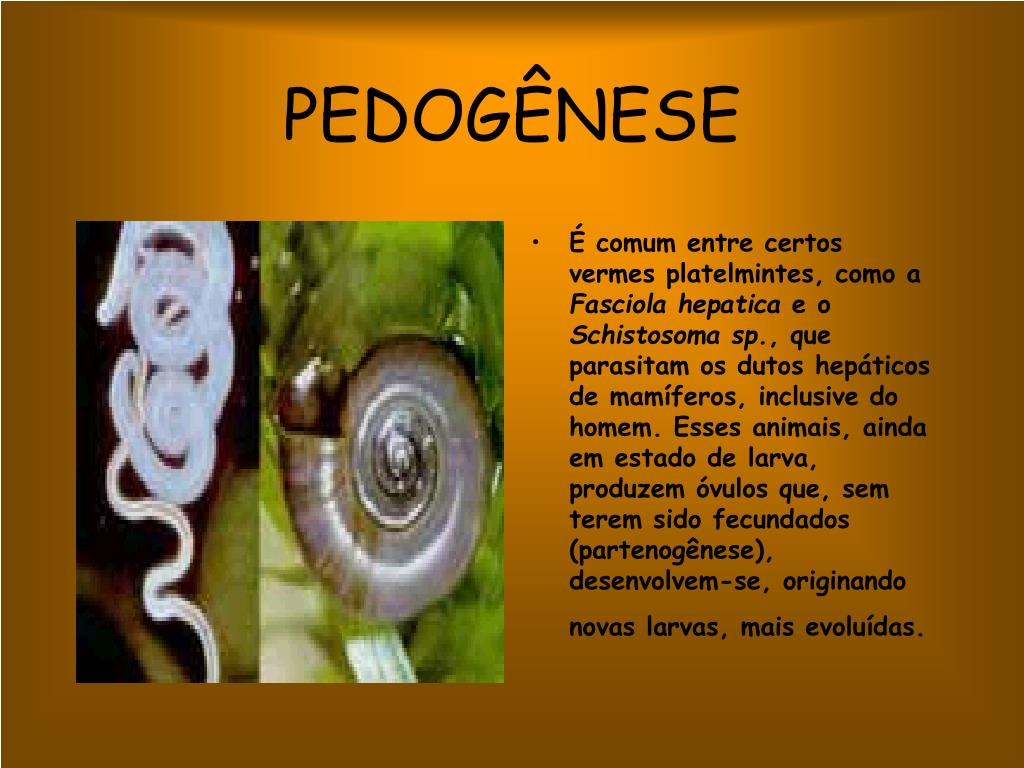 PEDOGÊNESE