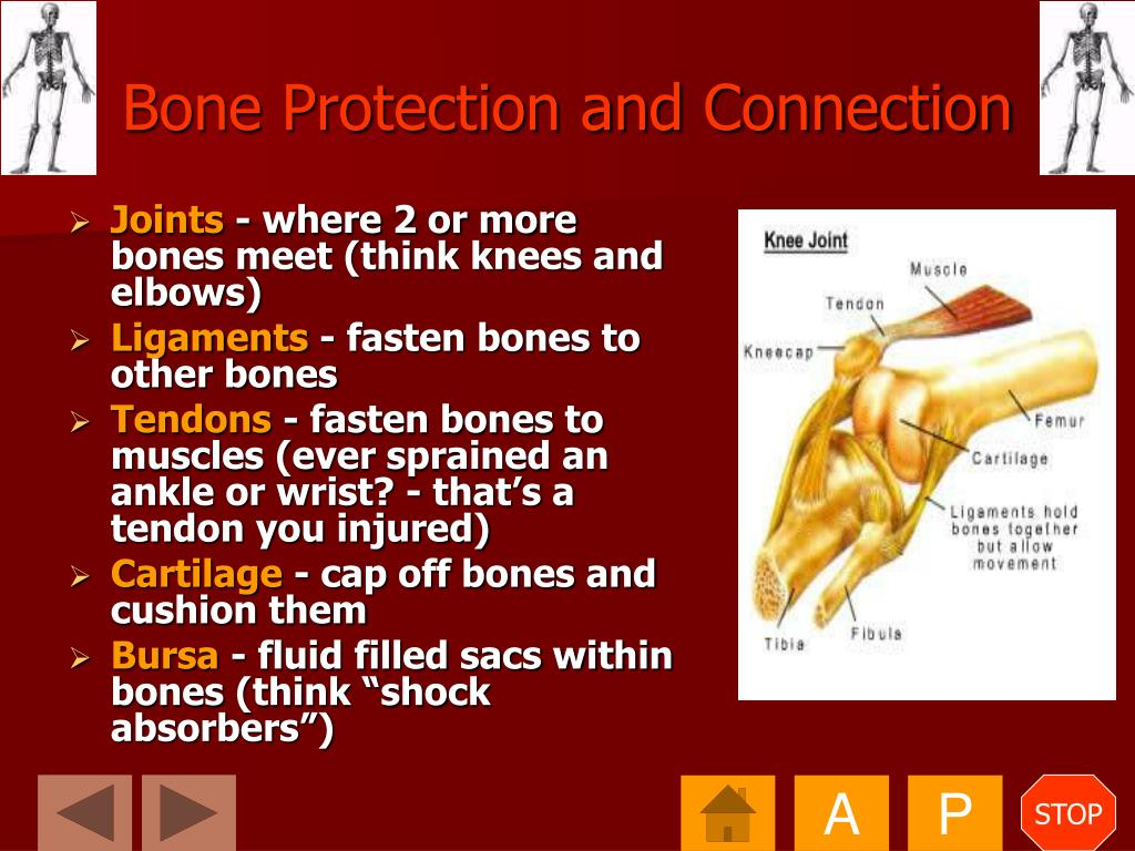 Bone Protection and Connection