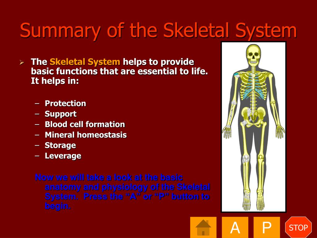 Summary of the Skeletal System