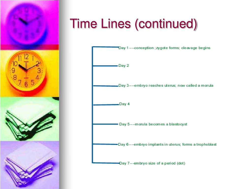 Time Lines (continued)