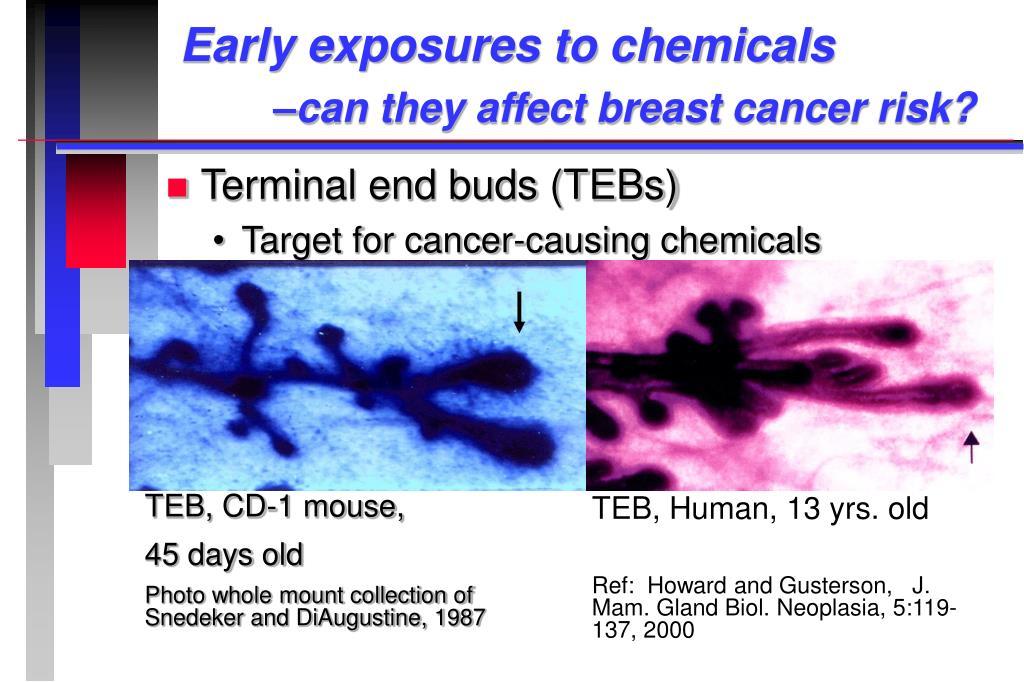 TEB, CD-1 mouse,