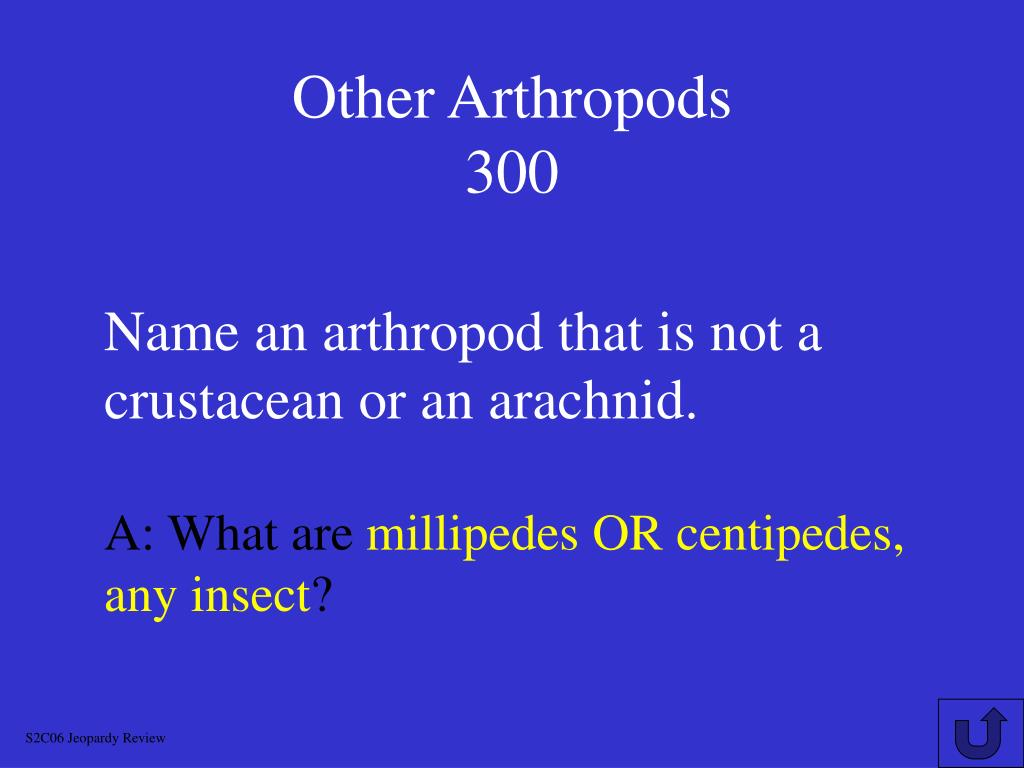 Other Arthropods