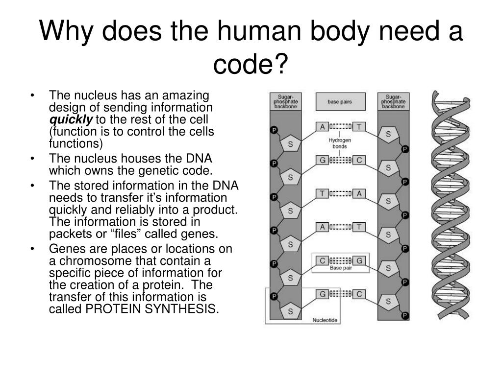 Why does the human body need a code?