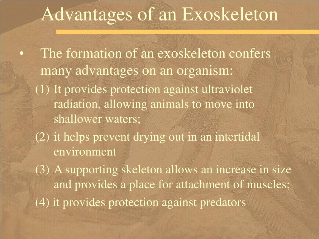 Advantages of an Exoskeleton