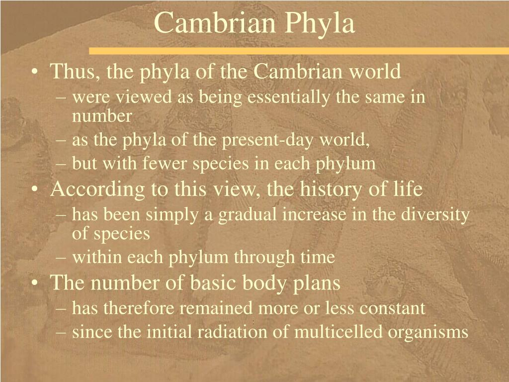 Cambrian Phyla