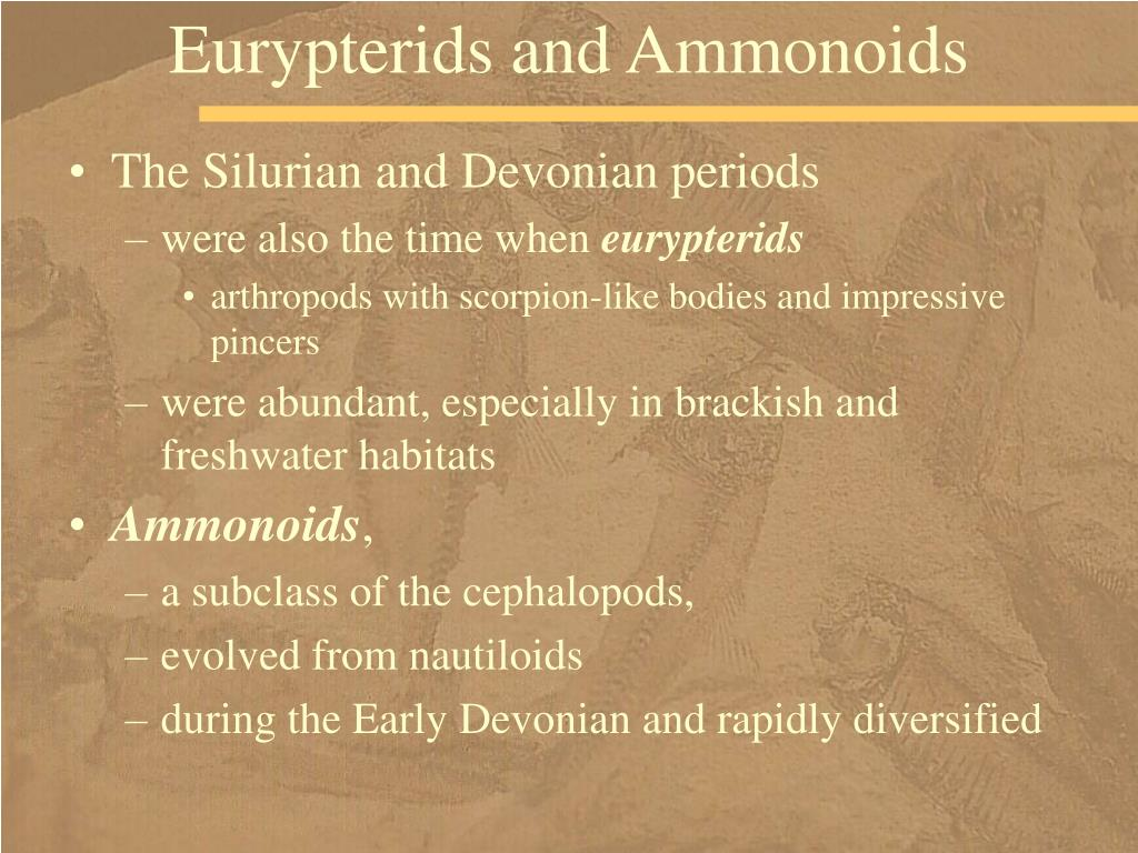 Eurypterids and Ammonoids