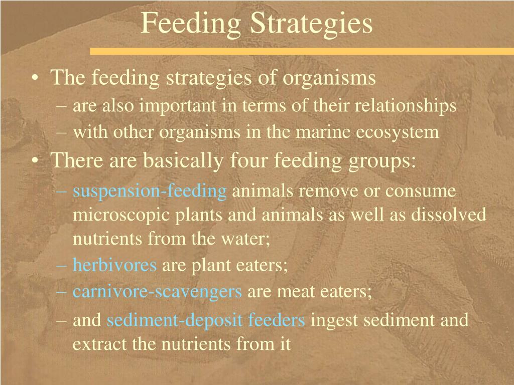 Feeding Strategies
