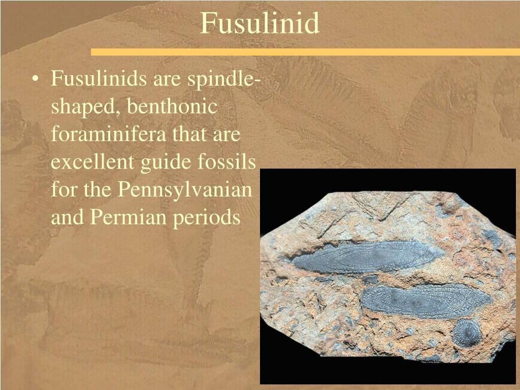 Fusulinid