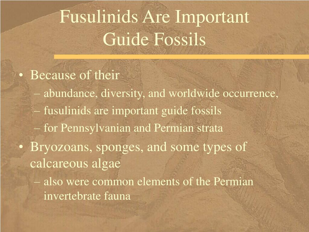 Fusulinids Are Important