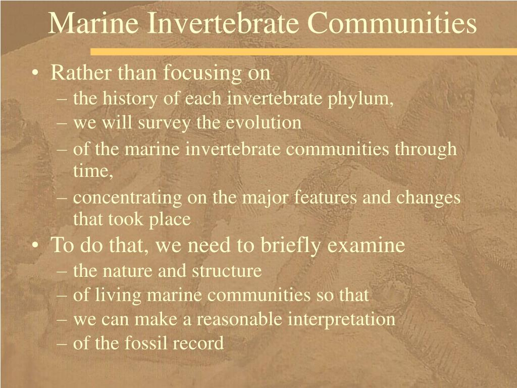 Marine Invertebrate Communities
