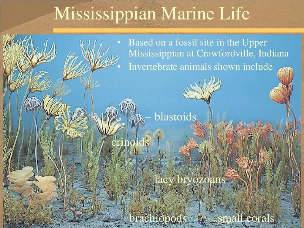 Mississippian Marine Life