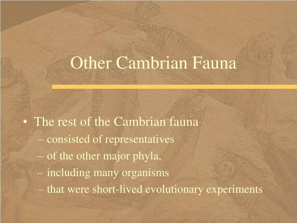 Other Cambrian Fauna