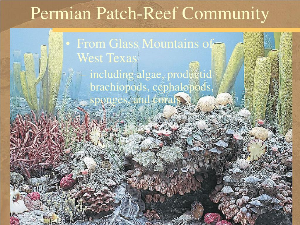 Permian Patch-Reef Community