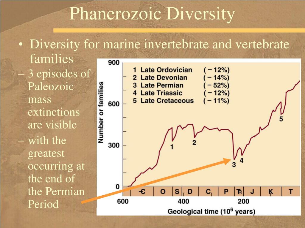 Phanerozoic Diversity