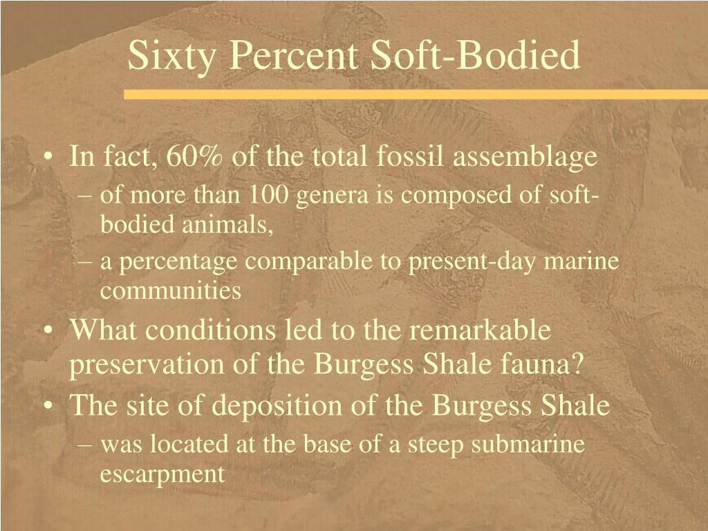 Sixty Percent Soft-Bodied