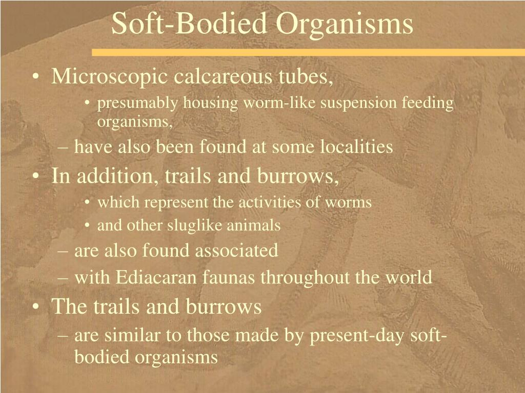 Soft-Bodied Organisms