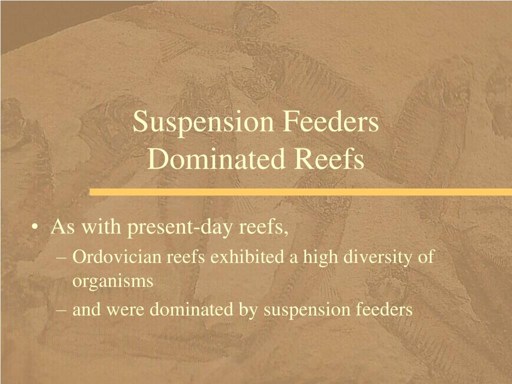 Suspension Feeders