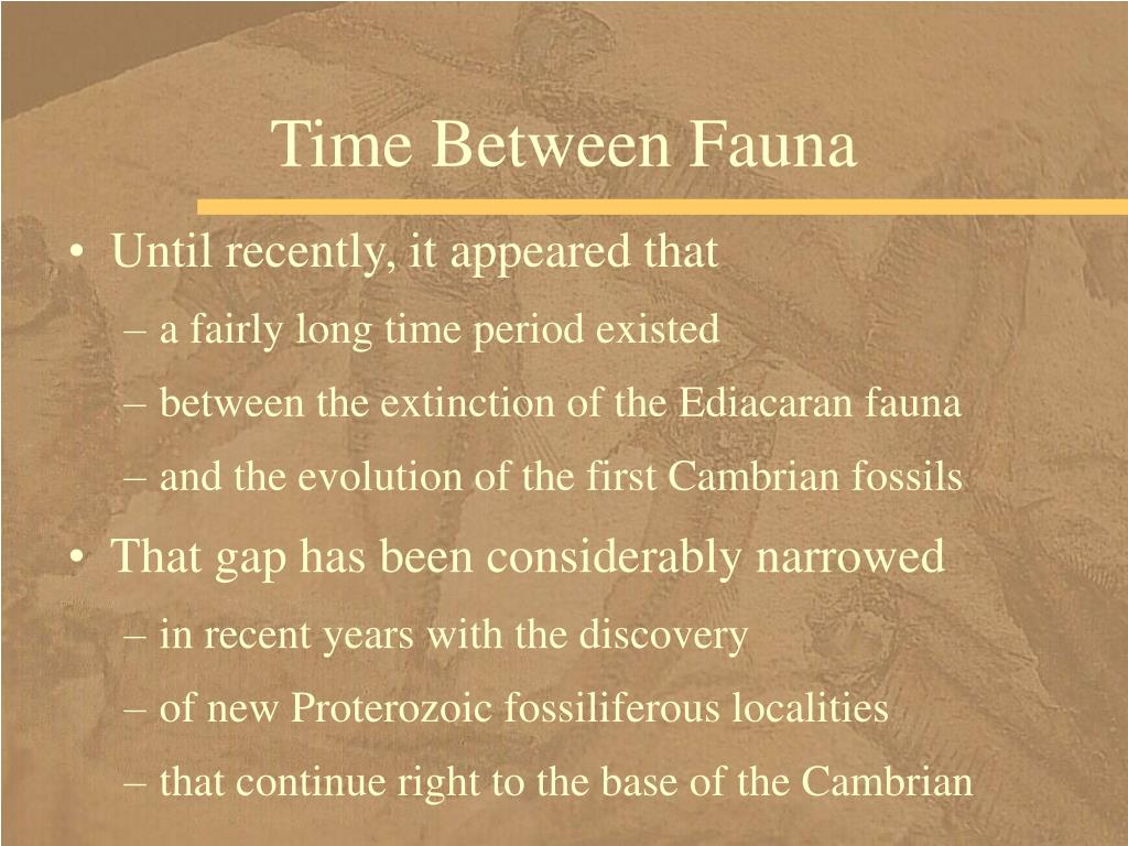 Time Between Fauna
