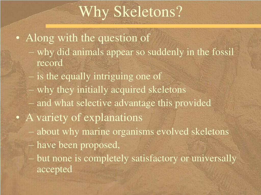 Why Skeletons?