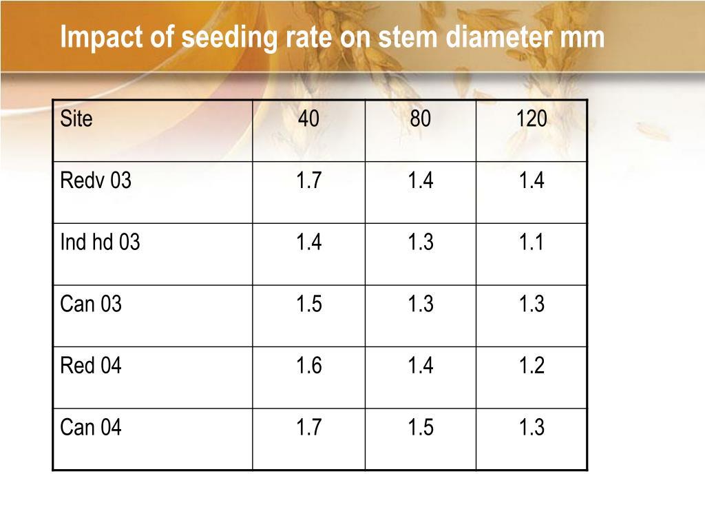 Impact of seeding rate on stem diameter mm