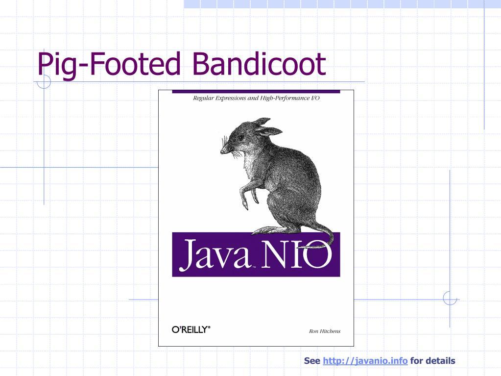 Pig-Footed Bandicoot