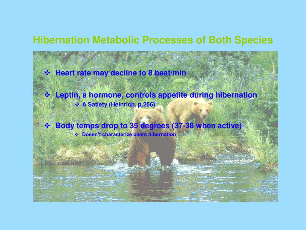 Hibernation Metabolic Processes of Both Species