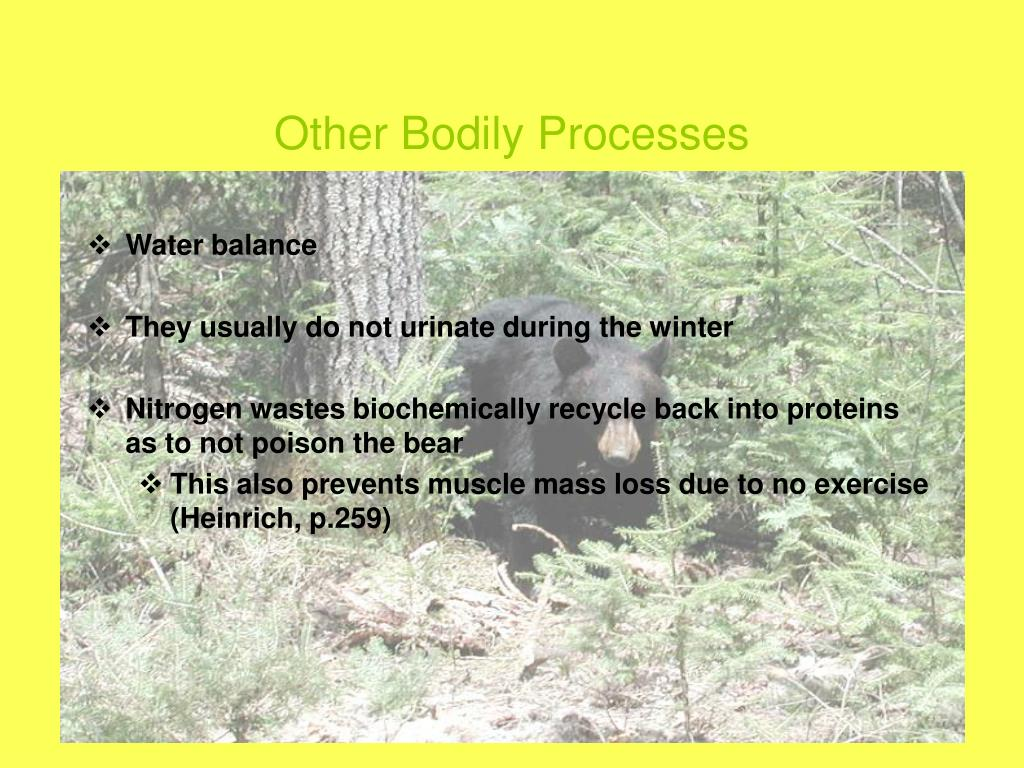 Other Bodily Processes