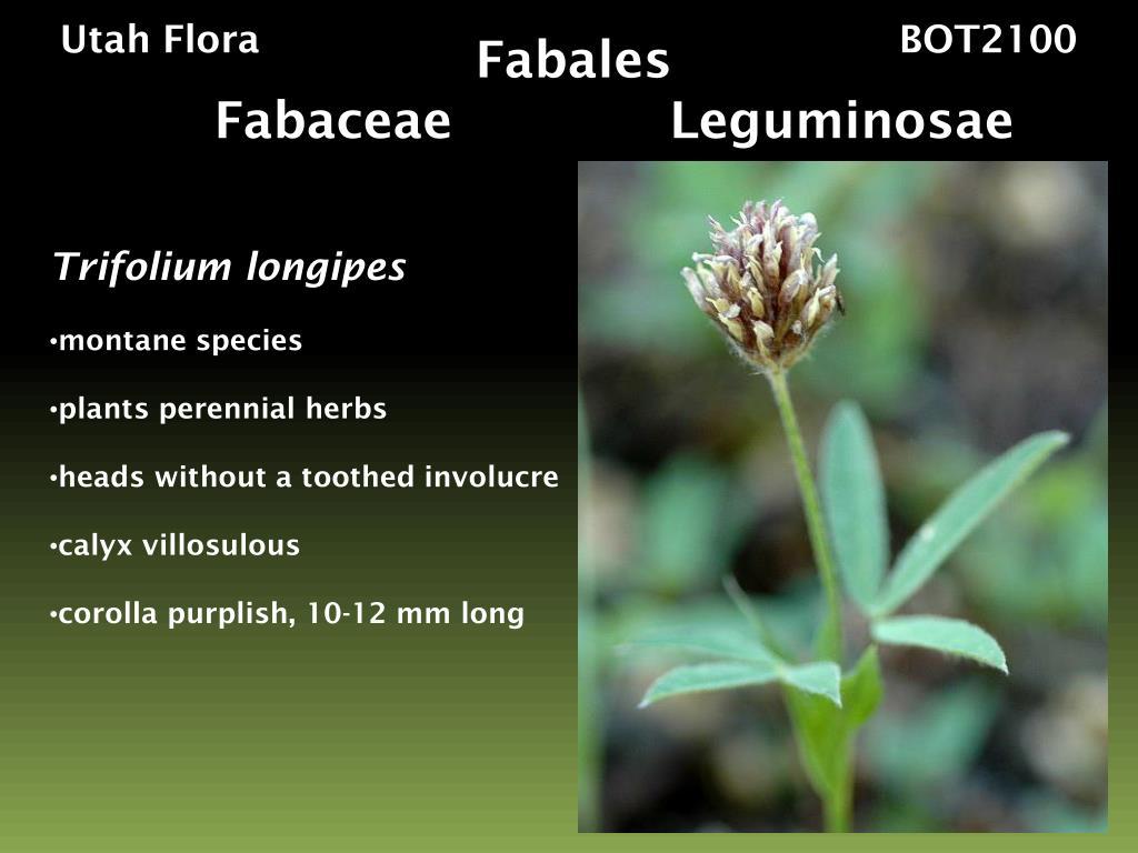 Utah Flora                                                     BOT2100