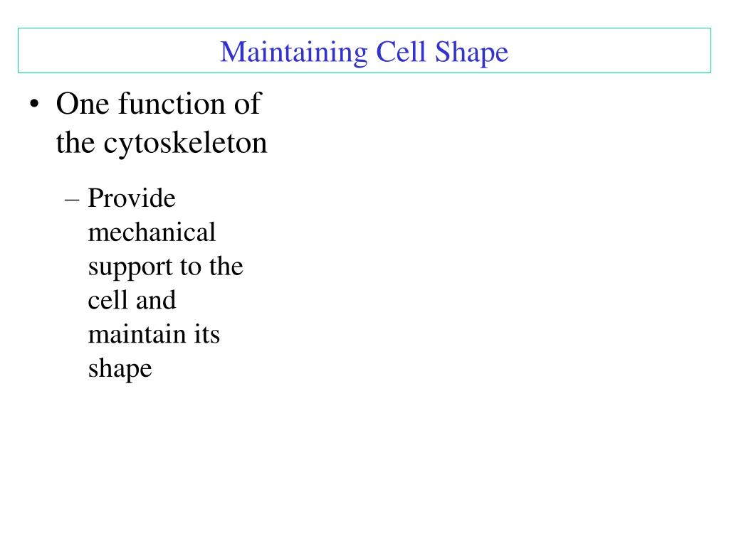 Maintaining Cell Shape